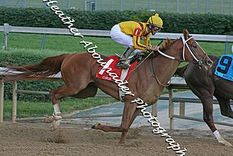 Stephen Foster Handicap - Curlin on his way to winning the Stephen Foster Handicap 2008