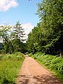 Cycle Trail, Forest of Dean, Long Straight Descent - geograph.org.uk - 199931.jpg