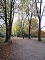 DO-ND 04-Holländische Linden.jpg