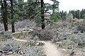 Davis Creek Park - panoramio (3).jpg