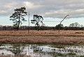 Delleboersterheide, natuurgebied van het It Fryske Gea. 25-12-2019. (actm.) 16.jpg