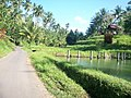 Desa Sampiri Airmadidi - panoramio - Marcky Bolung (4).jpg