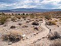 Desert Discovery Trail - Cottonwood Cove (adc9eeda-d388-4f37-ae35-741c088dc7b4).jpg