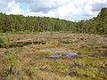 Detail from Ugglemossen from S footbridge Vastergotland Sweden 6June2020.jpg