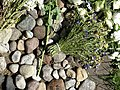 Detail of Memorial at Site of Lietukis Garage Massacre of Jewish Men - Kaunas - Lithuania - 02 (27818261412) (2).jpg