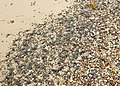 Detail of beach material, The Naze - geograph.org.uk - 1187883.jpg