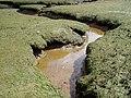 Devoran creek - Flickr - AndyRobertsPhotos.jpg