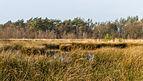 Diakonievene. Natuurgebied van It Fryske Gea 28.jpg