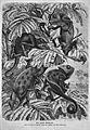 Die Gartenlaube (1869) b 133.jpg