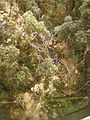 Diorama of early trail P9040341.JPG