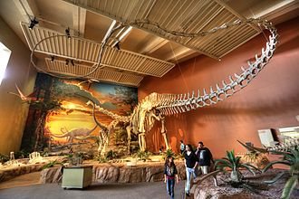 New Mexico Museum of Natural History and Science - Image: Diplodocus tail