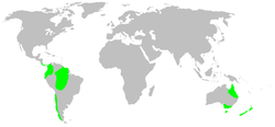 Distribution.synotaxidae.1.png