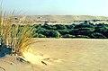 Doñana 1986 12.jpg