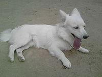 Dog white.jpg