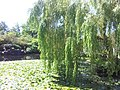 Dr Sun Yat-Sen Gardens - panoramio.jpg