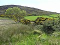 Dreenagh Townland - geograph.org.uk - 1329285.jpg