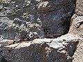 Drill Holes in Knoll Quarry, Torquay (1).jpg