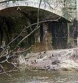 Ducks on a sandbank - geograph.org.uk - 1704246.jpg