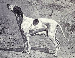 Dupuy Pointer from 1915.JPG
