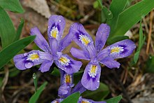 Purple flowers among green stems