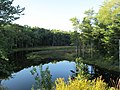 East Branch Ware River, North Rutland MA.jpg