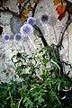 Echinops ritro ENBLA03.jpg