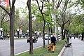 El Ayuntamiento instala 126 cajas nido en los árboles del Paseo de la Castellana 03.jpg
