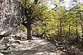 El Chalten-Sendero Salto del Chorrillo (38416040805).jpg