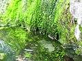 El Flujo de la Naturaleza.JPG