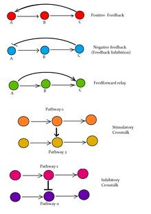 Regulation of mTORC1 by growth factors, energy status, amino acids...