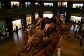 Elephants at the American Museum of Natural History 1.jpg