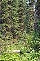 Emerald Lake IMG 5157.JPG