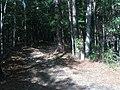Entering the woods, Horseshoe Bend NMP.jpg