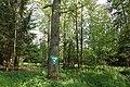Erlenbruch Langwiesenholz 01.jpg