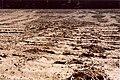 Erosion Netzwerk013.jpg