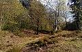 Faestendic, Joyden's Wood.jpg