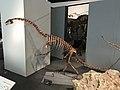 Falcarius skeleton.jpg