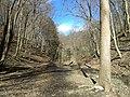 Fall Run Park in Shaler Township, late winter - 31.jpeg