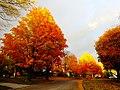 Fall in Madison - panoramio (15).jpg