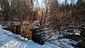 Fallen Trees - Kitchener, Ontario.jpg
