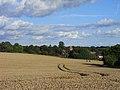 Farmland, Aldworth - geograph.org.uk - 1568877.jpg