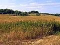 Farmland near Shaw, Newbury - geograph.org.uk - 35863.jpg