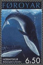 Photo of stamp displaying diving whale with bent tail with Faroyar printed across the top and Nebbafiskur and Baelaenoptera physalus in successively smaller print at bottom