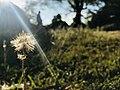 Feathery flower.jpg