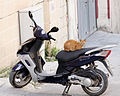 Feral cat in Triq il-Batterija Valletta.jpg