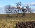 Field and trees - geograph.org.uk - 1161977.jpg