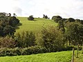 Field by Sharpham Estate - geograph.org.uk - 956009.jpg