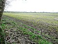 Field east of Tylers Copse - geograph.org.uk - 757273.jpg