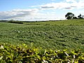 Field near Concord Farm - geograph.org.uk - 1884670.jpg