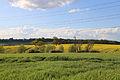 Fields looking north from churchyard, Stapleford Tawney, Essex, England.jpg